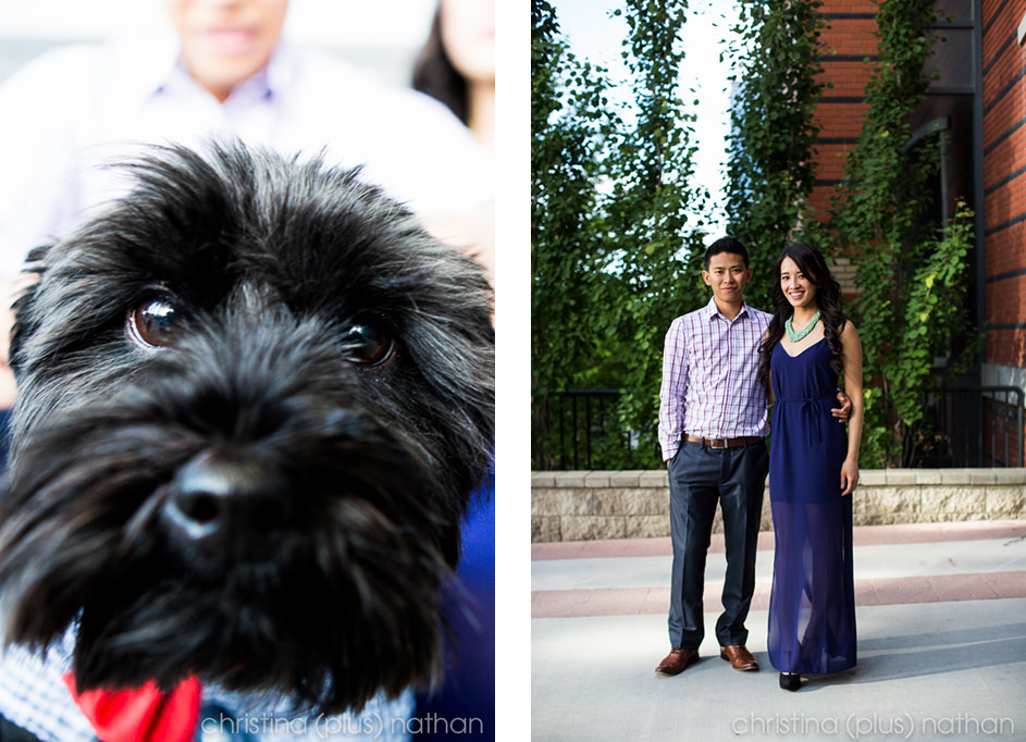 Engagement-photo-dog