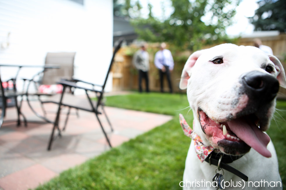 Odin the dog at a Calgary backyard wedding shot by christina (plus) nathan