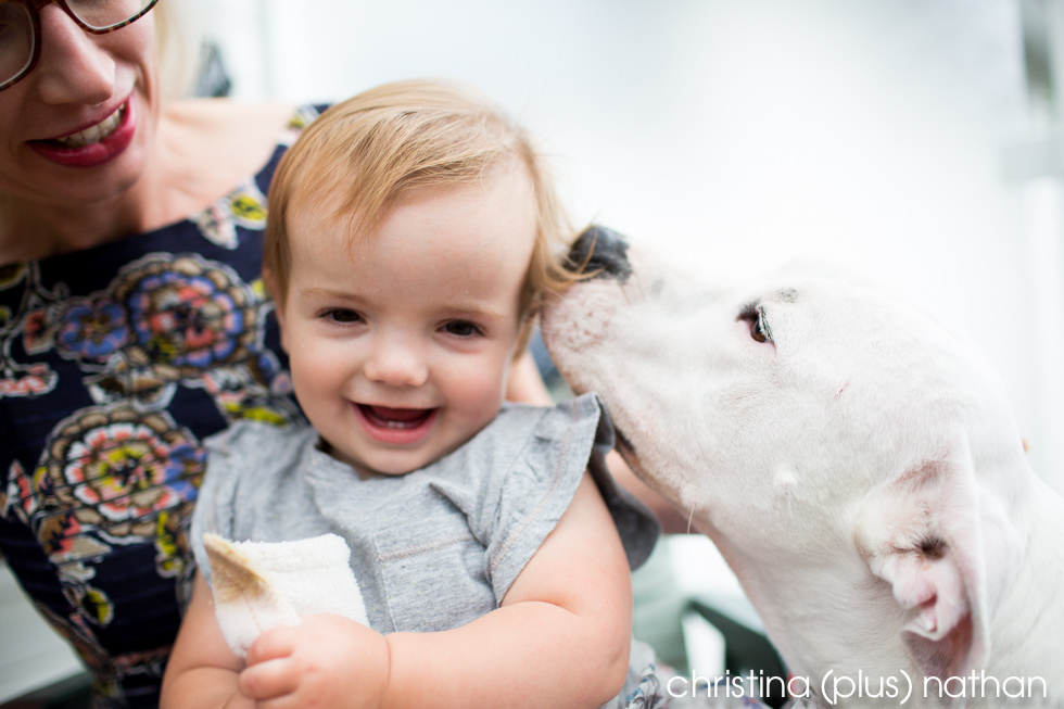 Pit bull kisses baby before backyard wedding ceremony