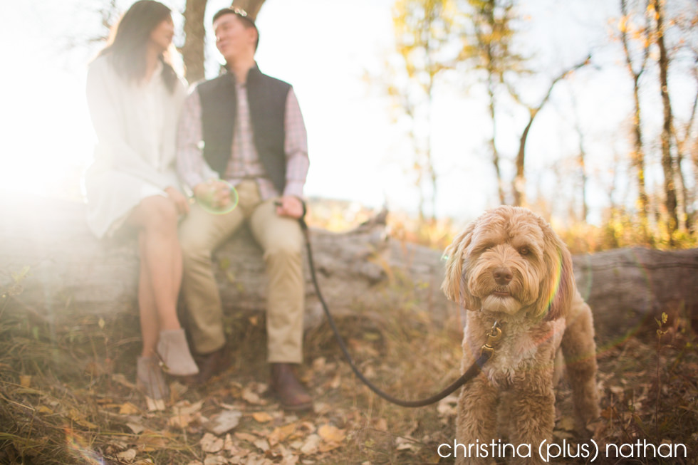 Calgary Engagment photography with Dogs
