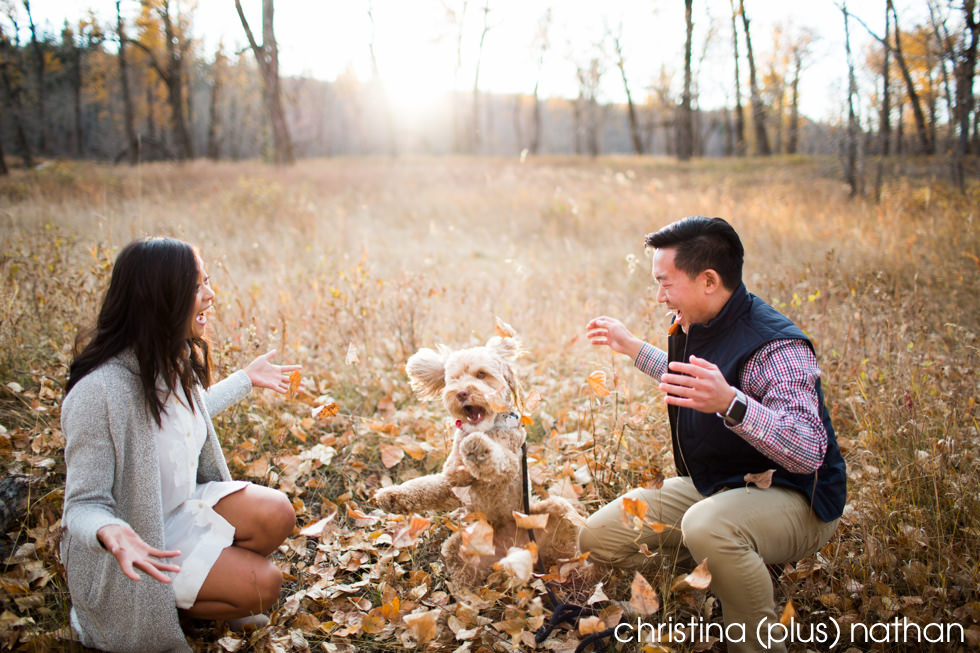 Dog engagement photos Calgary